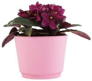Comment Glaze Pots de fleurs Clay