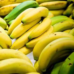 Le cycle d'un Banana Tree de vie