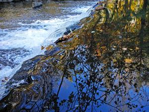 Faits sur le biome d'eau douce