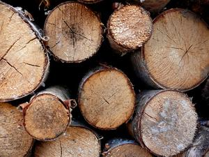 Comment couper & Cure Pine Logs