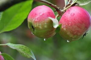 Comment planter des arbres fruitiers et de l'Espace