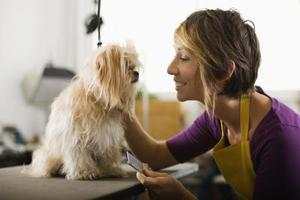 Comment endormir un chien pour un Haircut