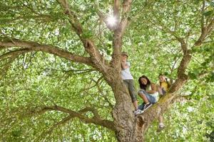 Comment tuer sélectivement les racines des arbres