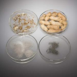 Comment identifier les quatre classifications de base des allergènes