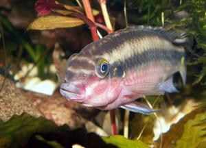 Comment faire Réservoirs Plexi-verre poisson