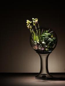 Plantes pour terrariums