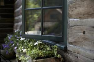 Plantes ombre aimante pour une boîte de fenêtre
