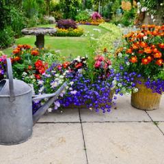 Quelles sont les fleurs fleurir toute l'année?