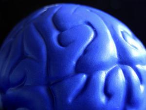 Maison modèle du cerveau