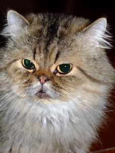 Des niveaux élevés de créatinine chez les chats