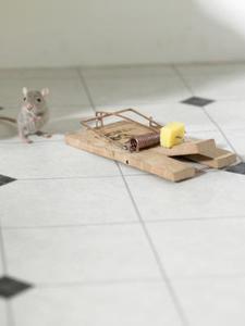 enlever odeur souris morte. Black Bedroom Furniture Sets. Home Design Ideas