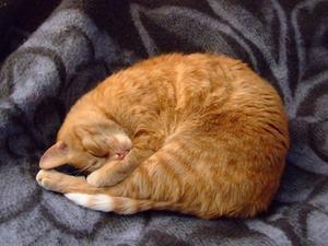 Les effets secondaires de Buprenex chez les chats