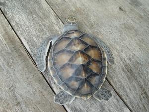 Comment faire une tortue sans papier