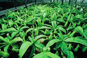 Qu'est-ce que Osmocote 16-8-12 faire pour aider pousser une plante?