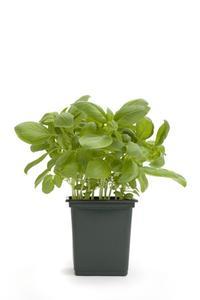 Comment se départir de plastique Pots de fleurs