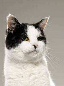 Colons touchées chez les chats
