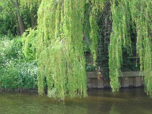 Plantes près des rivières et ruisseaux