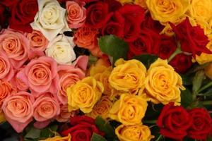 Comment faire de p tales de roses comestibles sucre glac - Petale de rose comestible ...