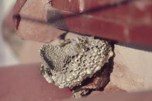 Comment faire pour supprimer Volets Avec Wasps