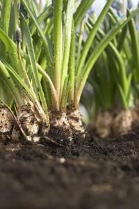 Comment faire pour augmenter le phosphate naturel dans le sol