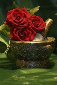 Comment préserver les roses avec de la glycérine?