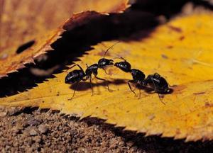 Comment se débarrasser des fourmis en désactivant la chaleur en hiver
