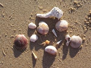 Décorations de plage maison