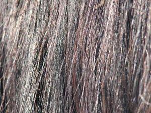 Comment faire un Flogger De Cheveux de Cheval