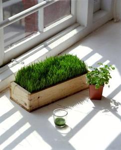 Huile Essentielle pour le traitement de la moisissure dans les plantes d'intérieur