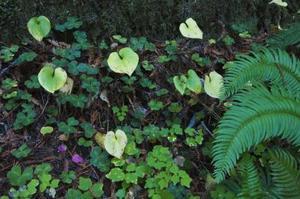 Comment tuer les plantes couvre-sol envahissantes