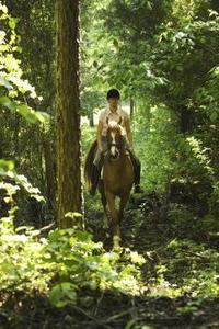 Comment faire une ligne à haute Picket pour les chevaux