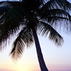 Articles essentiels nécessaires pour vivre sur une île déserte tropicale