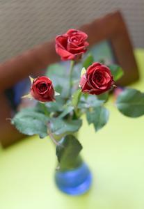 Fourmis sur rosiers - Bicarbonate de soude fourmis ...