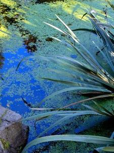 Comment construire un filtre étang de jardin