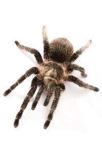 Comment créer araignées pour une activité d'art