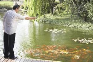 Comment arrêter hérons de prendre du poisson de l'étang