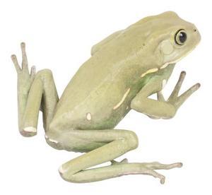Comment faire les pieds de grenouille