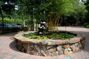 Plantes naturelles pour un étang