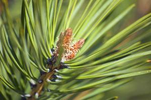 Les meilleurs arbres et plantes d'intérieur
