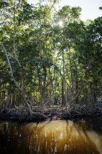 Liste des Dix Plantes menacées à Palawan