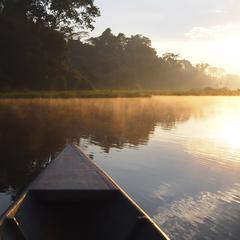 Aliments autochtones dans la forêt amazonienne