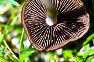 Puis-je mettre champignons dans mon compost?