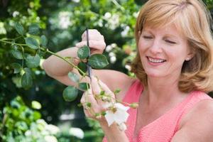Comment tailler asters salvia et autres plantes à fleurs