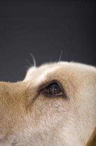 quels sont les points noirs dans les yeux de mon chien. Black Bedroom Furniture Sets. Home Design Ideas