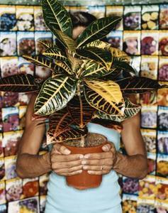 Comment prendre soin d'un Ficus Robusta