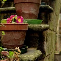 Plantes à fleurs en pot