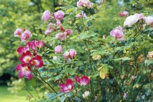 Comment planter un jardin anglais
