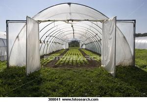 Comment rendre le sol bon marché pour les plantes à effet de serre