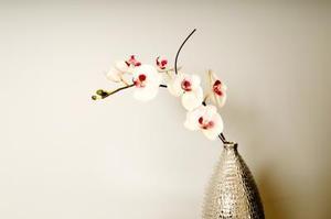 Comment faire votre propre engrais Orchid