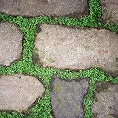 Que planter entre un chemin Flagstone